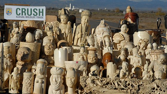 Ivory carvings crush