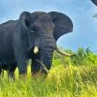 Impact jacht op dierenpopulaties groter dan gedacht