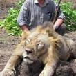 Ontslag dierenarts na doodschieten leeuw