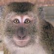 Eerste groep Java-apen van MSD al vóór Nieuwjaar naar AAP