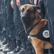 Hond Diesel gedood door terroristen Parijs