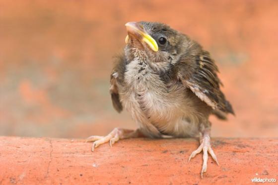 vogeltelling
