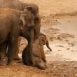 #GNvdD: Babyolifant gered van verdrinkingsdood