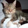 #GNvdD: Oude zwerfkat zoekt hulp