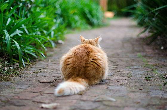 katten een hekel hebben