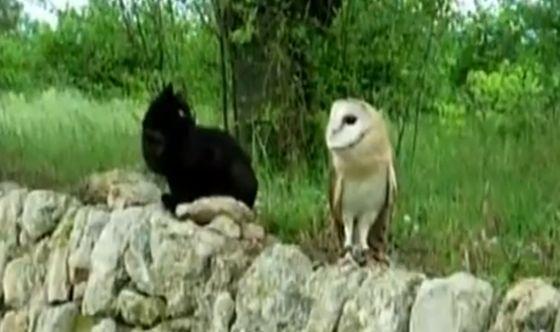 kat en uil