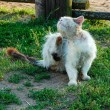 Kattenziekte in Amsterdam, Den Haag en Alphen aan den Rijn
