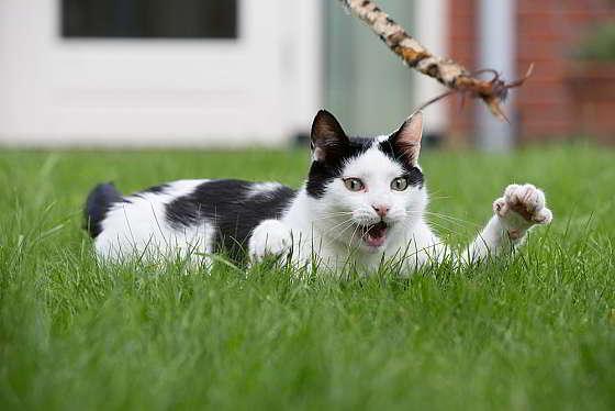 Kat spelen - goede voornemens