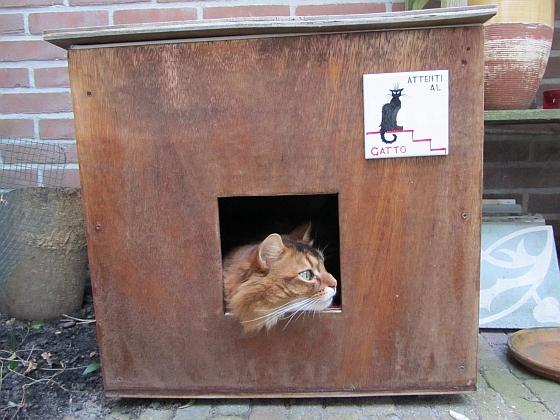 Kat territorium - Wat maakt een kat gelukkig