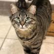 Tennessee opent online database veroordeelde dierenmishandelaars