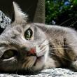 Tweede Kamer wil verbod afschieten katten