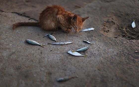 Katje krijgt restjes bij de markt van Gaza