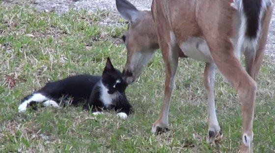 Katje en hert - wasbeurt