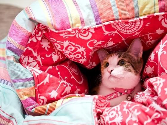 Katje op bed