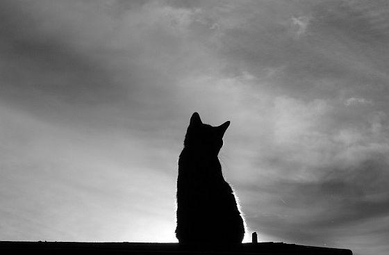 Kat silhouette - aanrijding