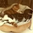 #GNvdD: Asielkatten thuis in kattencafé Ditjes en Katjes