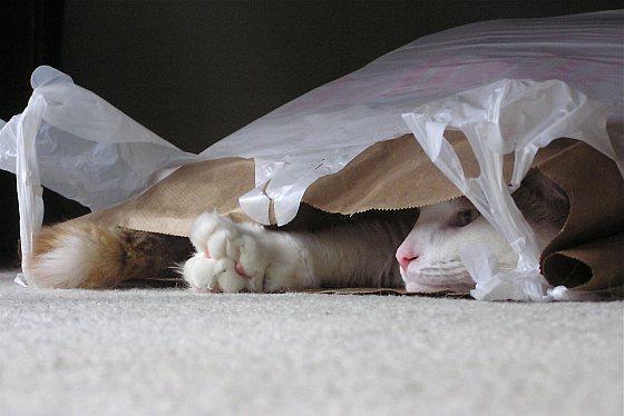 Katten plastic