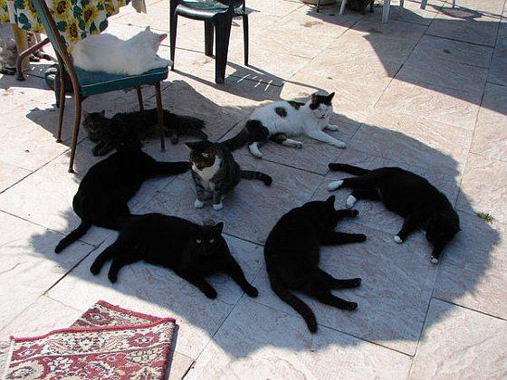 Katten - kat en mens