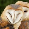 Jachtopziener vindt 30 dode beschermde vogels