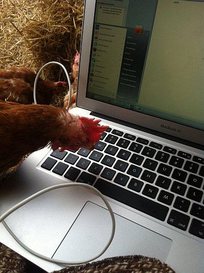Kip op het toetsenbord