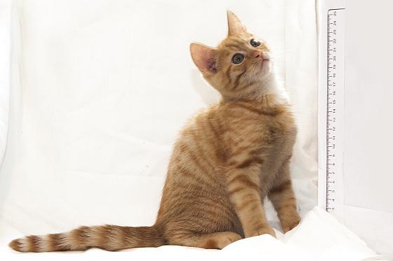 kitten 10 weken
