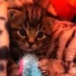 #GNvdD: Samengesteld kittengezin knuffelt wat af