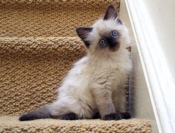 Week van het Kitten