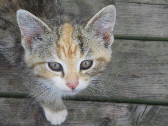 kittens - kittenleeftijd