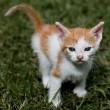 Zwerfkattenopvang nooit eerder zo vol; veel kittens ter adoptie