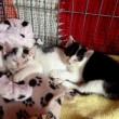 #GNvdD: Hulpactie zwerfkatten in bungalowpark Ardennen