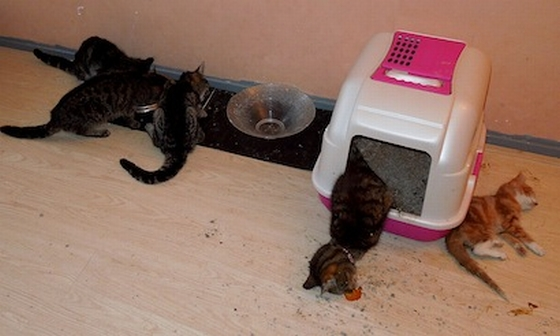 kittens verwaarloosd
