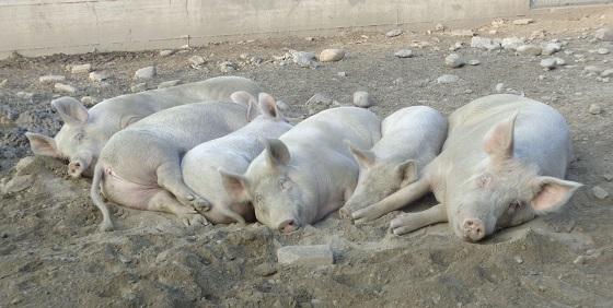 kleine dierenboerderij
