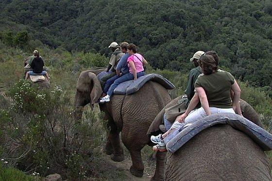 Olifantenritten - Knysna Elephant Park