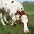Alarmerende toename dierverwaarlozing door veehouders
