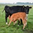 Roos Vonk: Ethisch willen omgaan met dieren is niet 'emotioneel'