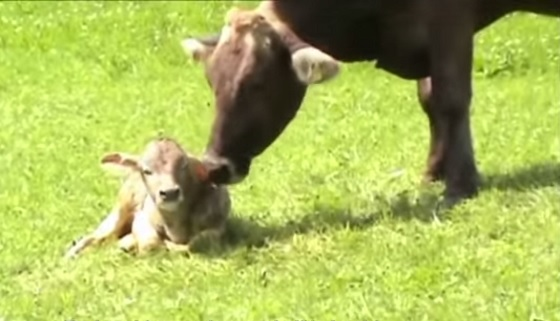 vegetarische boer