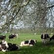 WSPA: Weer minder koeien in de wei