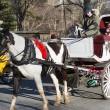 New York schaft paard en wagen af