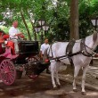 Lonneke Engel: Koetspaarden in New York City gaan verhuizen