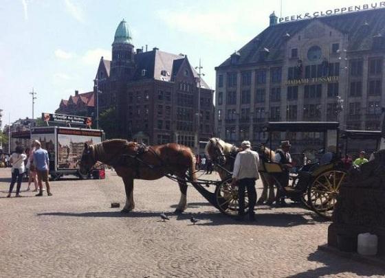 Koetspaarden paardenkoetsen