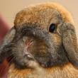 Luxe warenhuis Harrods verkoopt knuffel van konijnenbont