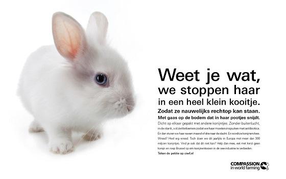 konijnenposter