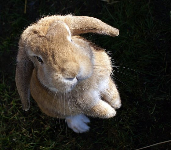 Konijntje - konijnenopvang