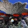 #GNvdD: Hawaii krijgt grootste zeereservaat ter wereld