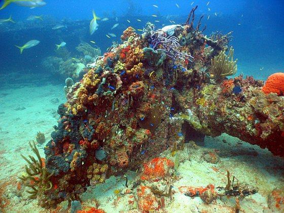 Koraal op gezonken schip - Recyclende dieren