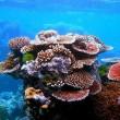 WNF lanceert crowdfunding voor bouw echt koraalrif