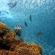 Wetenschappers waarschuwen voor koraalsterfte