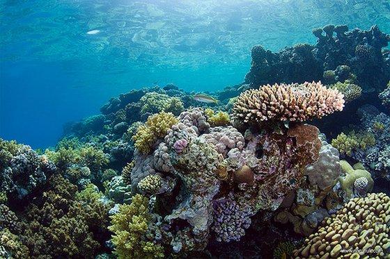 koraalschade