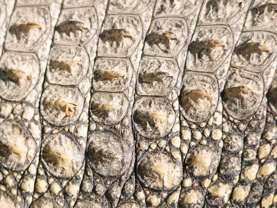 krokodillenhuid