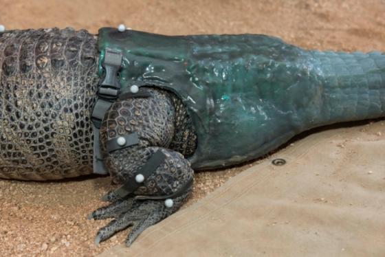 kunststaart alligator